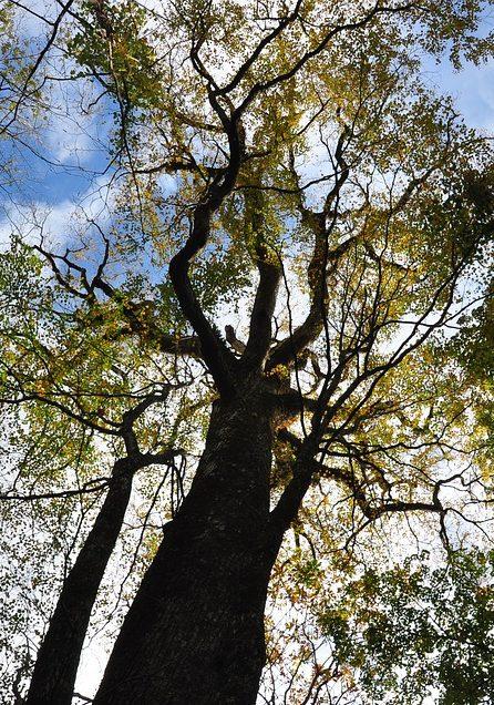 Árboles en zonas comunes